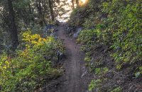 Singletrack on Stack Rock loop